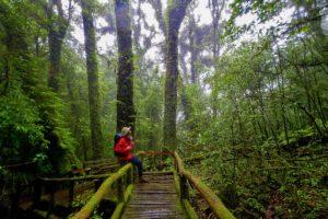 Ang Ka Nature Trail in Doi Inthanon National Park, Chiang Mai