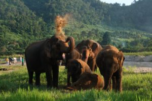 Popular Day Trips from Chiang Mai. Elephant Nature Park.1
