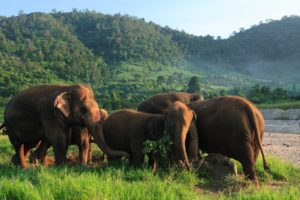 Popular Day Trips from Chiang Mai. Elephant Nature Park.2