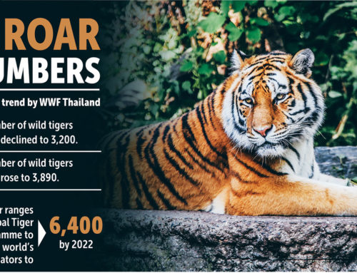 Protecting Thailand's remaining Wild Tigers